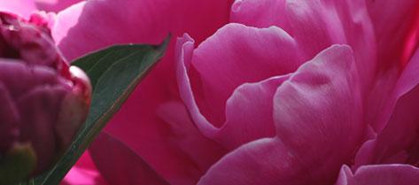 Fleuriste montreal fleuriste pourquoi pas fleurs livraison for Livraison fleurs paypal