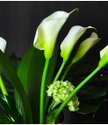 white callas lilies