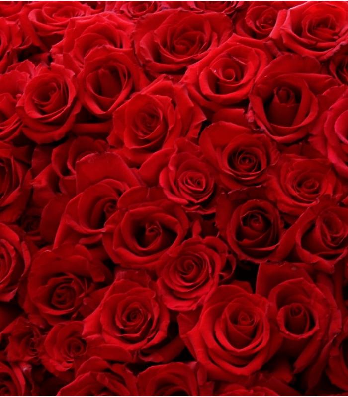 Roses Rouges Bouquet De Roses Rouges 24