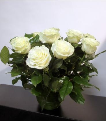 WHITE ROSES F9