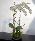 ORCHID PLANT VASE PV1