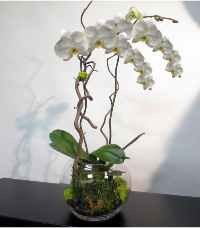 white orchid plant in glass vase. Black Bedroom Furniture Sets. Home Design Ideas