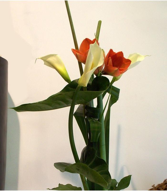 Bouquet chic amaryllis fleuristemontreal for Amaryllis ne fleurit pas