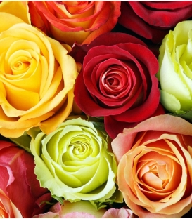 MIXED COLOR ROSES MINIMUM 6 ROSES