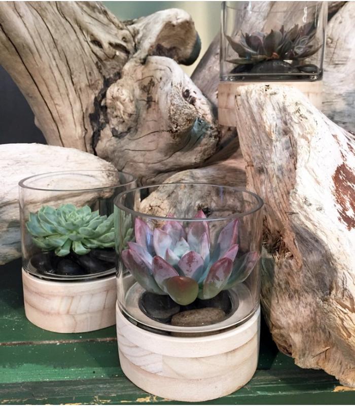 Echeveria plant or air plant with vase for Fleur pas chere a planter