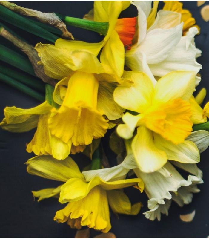 abonnement floral pour offrir un bouquet de fleurs fra ches coup es de saison. Black Bedroom Furniture Sets. Home Design Ideas
