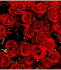12 long red roses bouquet Valentine