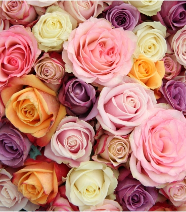 MIXED COLOR ROSES VALENTINE BR15