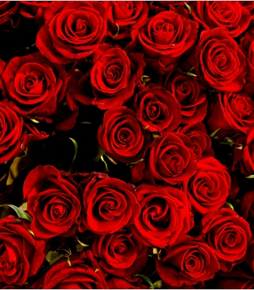 6 LONG RED ROSES BOUQUET VALENTINE
