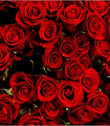 BOUQUET SAINT-VALENTIN 6 ROSES ROUGE LONGUES