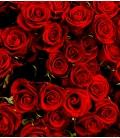 Bouquet Saint-Valentin 30 roses rouges longues