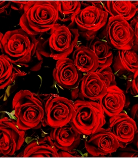 12 ROSES ROUGES LONGUES