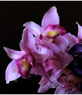 chic bouquet callas