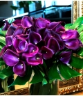 BOUQUET PURPLE CALLA LILIES